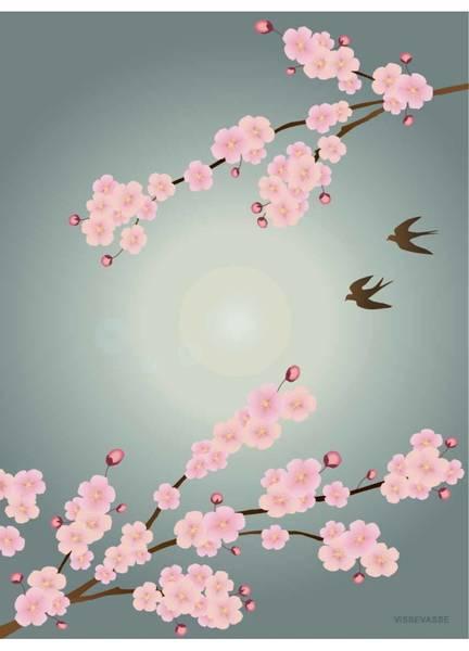 Bilde av PLAKAT - Sakura - Vissevasse